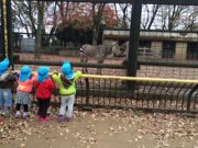 When they saw Zebra they were all happy